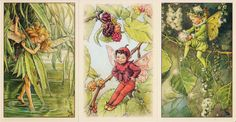 Flower Fairies One Hundred Postcards by Cicely Mary Barker Cicely Mary Barker, Vintage Fairies, Legendary Creature, Flower Fairies, Folklore, Supernatural, Postcards, Fairy, Creatures
