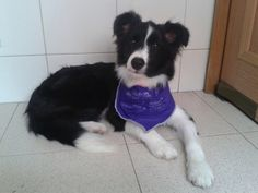 Kiara 5 meses Border Collie, Pictures Of Dogs, Dog Breeds, Border Collies