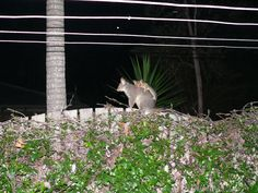 Our nightly visitor and her baby who would visit when I would hang out the clothes.