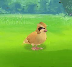Pokemon Gifs Gotta Pin'em All!