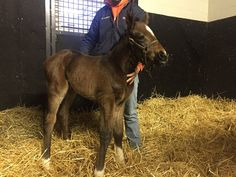 Untouched Talent's 2017 American Pharoah filly