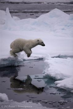 Arctic sea ice reaches minimum extent for 2013 as Greenpeace activists are held in Russian Arctic