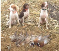 My hunting buddies ! Bo, Darton & Wilson in North Dakota .