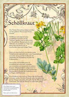 Schöllkraut http://www.kraeuter-verzeichnis.de/