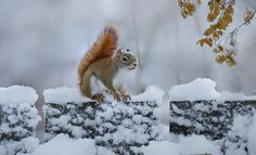 Squirrel by Irene on 500px