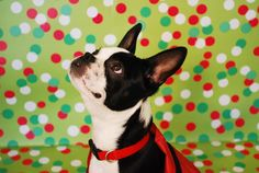 Pippa_3- Tips on photographing your pets at home