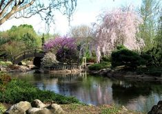 Mizumoto Japanese Stroll Garden, Springfield, MO Trees Blooming in Spring {This was sooo breathtakingly beautiful today.}