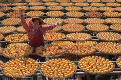 Pic: Oriental persimmon