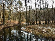 Es ist Internationaler Tag des Waldes. Also gehe heute doch mal in den Wald und genieße die frische Wind... ähm Frühlingsluft. Versuche mal ein paar Minuten ganz still zu sein und achte ganz aufmerksam darauf was du hörst. Versuche die unterschiedlichen Bäume zu bestimmen und fühle wie sich ihre Rinde anfühlt. Spüre die Ruhe und die Kraft die so ein Wald ausstrahlt. Übrigens ist heute auch Welttag der Poesie also schreibe doch in die Kommentare darüber wie es war im Wald.   #Uckermark…
