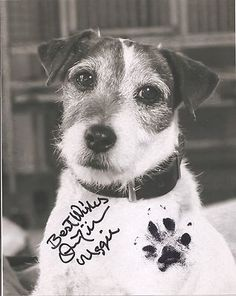 The perpetually cool Uggie is auctioning his pawtographed headshot for charity!! Help Uggie help other rescue kids by bidding - & make sure to watch his instruction video as well ♥