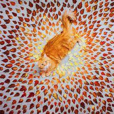 Все краски осени в одном фото [fs'e kraski os'en'i v adnom foto] - All colors of autumn in one photo www.ruspeach.com