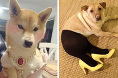 28 Dogs That Truly Know How To Accessorise