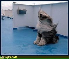 20 Pictures of Dogs in the Wind