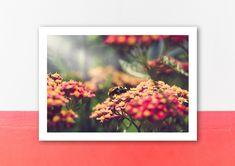 Poster, Etsy Shop, Painting, Pink, Postcards, Art Print, Handmade, Printing, Nature