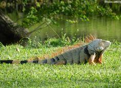 florida wild life | Florida Wildlife | Wildlife