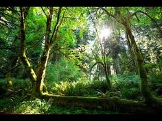 Rain  Sounds for sleeping, sleep, relaxation, rainforest natural sounds. Rainfall begins approx 2 minutes into video.