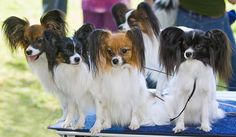 Doggies in an array of colors. How can these little guys NOT make you smile?