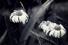 We Three by Sarah Van Dyck - Moore on 500px