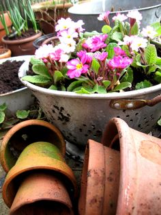 Using an old colander for a planter