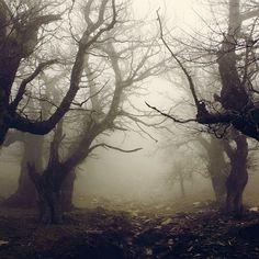 Dark Forest, Evia, Greece. Loving misty, sooky forests