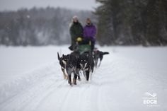 Just 2 hours north of Toronto you can experience a quintessentially Canadian activity by embarking in a dog sledding expedition. http://explorersedge.ca/stories/dog-sledding-adventures/ #dogs #sledding #winter