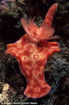 The colourful alien creatures living at the bottom of the sea: The underwater…