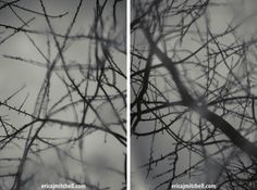 Dendrology Photography: A Winter Reflection