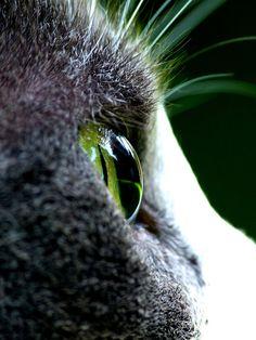 Traeumerle:  Die Augen einer Katze sind Fenster, die uns in eine andere Welt blicken lassen. (Spruch aus Irland)