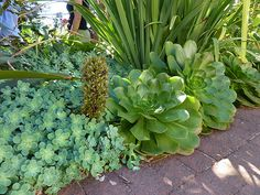 Deer resistant succulents | Flickr - Photo Sharing!