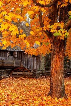 Autumn moments colorful woods autumn leaves fall orange bright rustic cabin