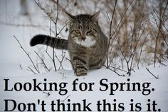 Cats in snow meme | Funny Cat Memes and Pictures About Cat Behavior
