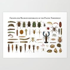 Freshwater Macroinvertebrates Of The Pnw Canvas Print by Clare Miller - Scientific Illustration - MEDIUM Nail Holes, Latest Generation, Canvas Prints, Art Prints, From The Ground Up, Buy Frames, Printing Process, Fresh Water, Original Art