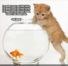 Red Dwarf-Cat likes fish I Love Cats, Cute Cats, Funny Cats, Funny Animals, Cute Animals, Weird Cats, Crazy Animals, Animals Images, Kittens Cutest