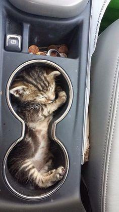 Chaton bien installé dans le porte-gobelet