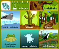 Animal Habitats And Fossils on Weather In 4 Seasons Worksheet