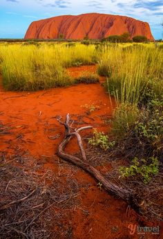 NT – Uluru (Ayers Rock), a UNESCO World Heritage Site, located in Uluru-Kata Tjuta National Park, Northern Territory, Australia. Visit Australia, Australia Travel, Kimberly Australia, Cook Islands, Travel Around The World, Around The Worlds, Ayers Rock, Beautiful Landscapes, Places To See
