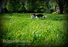 #LawnCare #gardenchat : Why my lawn is important to more then just me!