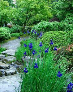 699 отметок «Нравится», 7 комментариев — GARDEN|ЛАНДШАФТНЫЙ ДИЗАЙН|САД (@garden_design_plants) в Instagram: «#flowers #сад #цветы #цветочки #petals #nature #beautiful #love #pretty #plants #blossom #sopretty…»