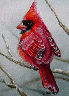Northern Cardinal Red Bird #Watercolor  #Artist jean weiner,on #etsy  from  LeMars