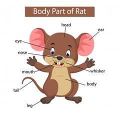 Diagram showing body part rat Royalty Free Vector Image Learning English For Kids, Teaching English Grammar, Spanish Language Learning, English Vocabulary Words, Kids Learning, English Lessons, Learn English, Animals Name In English, Preschool Colors