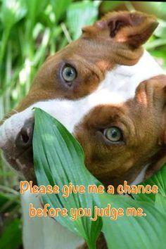 pitbullsofig #brindlepitbull #sleepingpitbull #Pitbullquotes #doglover http://pitbullsociety.org/facebook