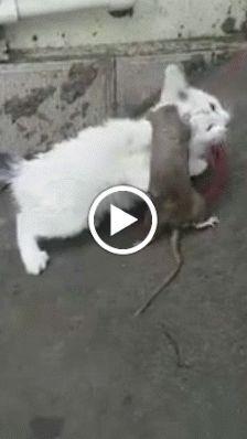 Google+ Humor, Google, Animals, Animales, Animaux, Humour, Moon Moon, Animal Memes, Animal