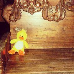 Dr. Mallard(Ducky), Isay's stuffed toy