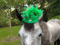 Green Feathers Fascinator - Mini Hat for Horses or Minis - Equine Tack Costume Metal Hair Clips, Black Feathers, Color Stripes, Fascinator, Minis, Horses, Hats, Pretty, Green