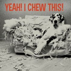 Learn how to stop your dog from chewing. Read more on my website http://www.dogbreedstraining.com/behavior/stop-dog-chewing/