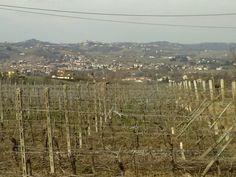 un vigneto; sullo sfondo Nizza Monferrato