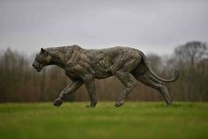 Bronze, signed, numbered and dated Lion Walking, Wild Lion, Sculptures, Lion Sculpture, He Is Able, Mark Making, Bronze Sculpture, Big Cats, Beast