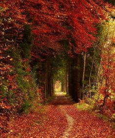 Trajeto de floresta, Bavaria, Alemanha