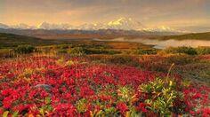 Alaska. Recorrido por los 50 estados de Estados Unidos | Naturaleza - Todo-Mail