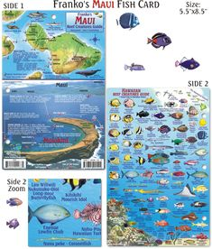 Waterproof Maui Reef Creatures Guide identifies the fish you'll see when diving or snorkeling off this beautiful Hawaiian island. http://frankosmaps.com/images/stories/HawaiiFishCardMaui2011SplashPage.png